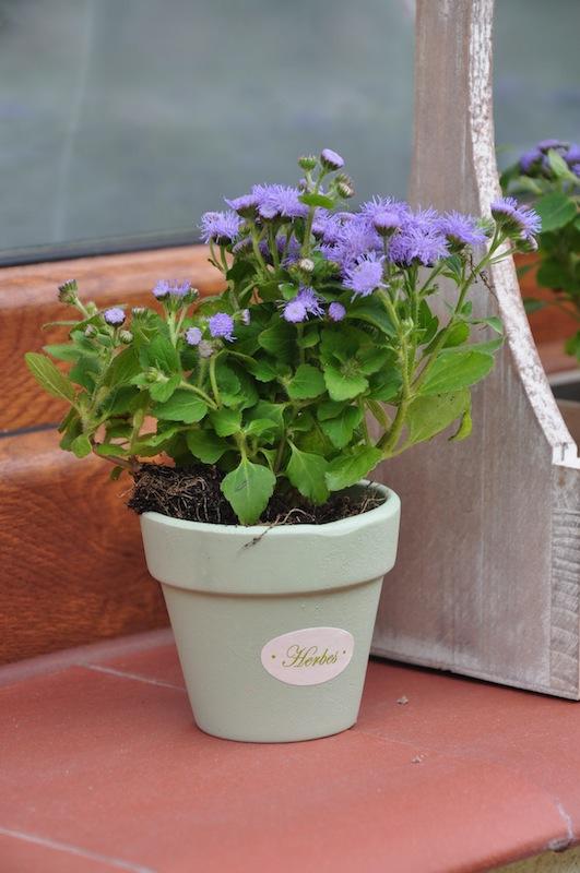 stylowy kwietnik na kwiaty herbes du jardin. Black Bedroom Furniture Sets. Home Design Ideas